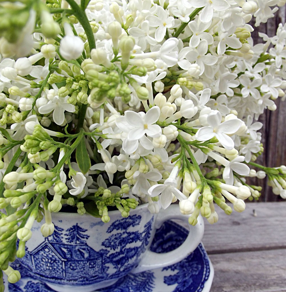 Fresh Cut Lilacs: How to enjoy your blooms indoors for as long as possible