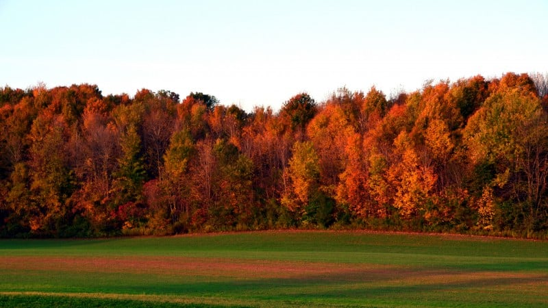 Taking Time to Appreciate Autumn