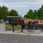 Amish horse and buggy at the Finger lakes Produce Auction