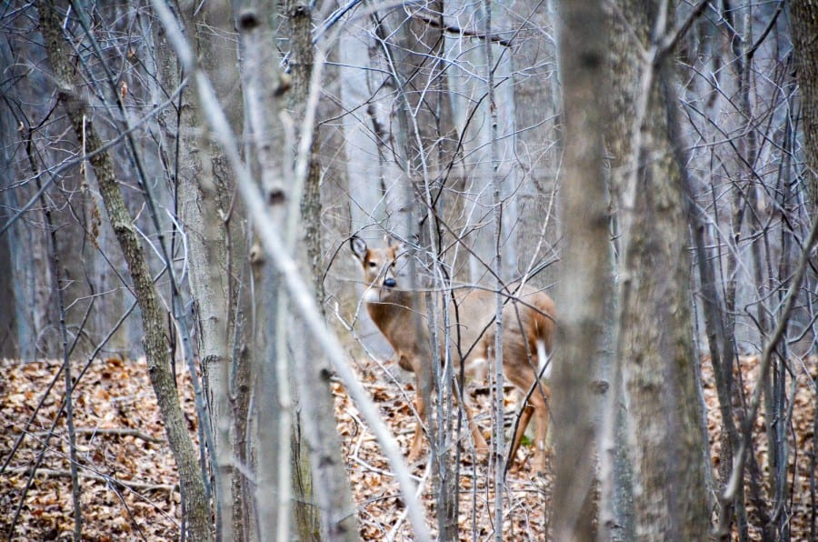 Ohh Deer, Merry Christmas