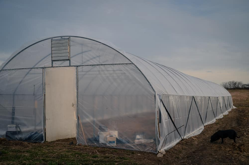 Covering the hoop house with new plastic (Spring 2017)