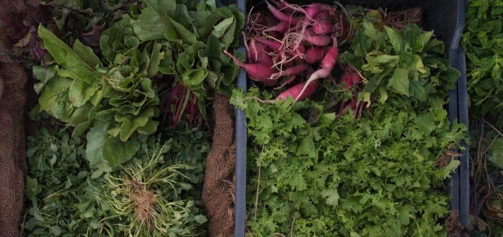 Finger Lakes Farmers Markets 2017