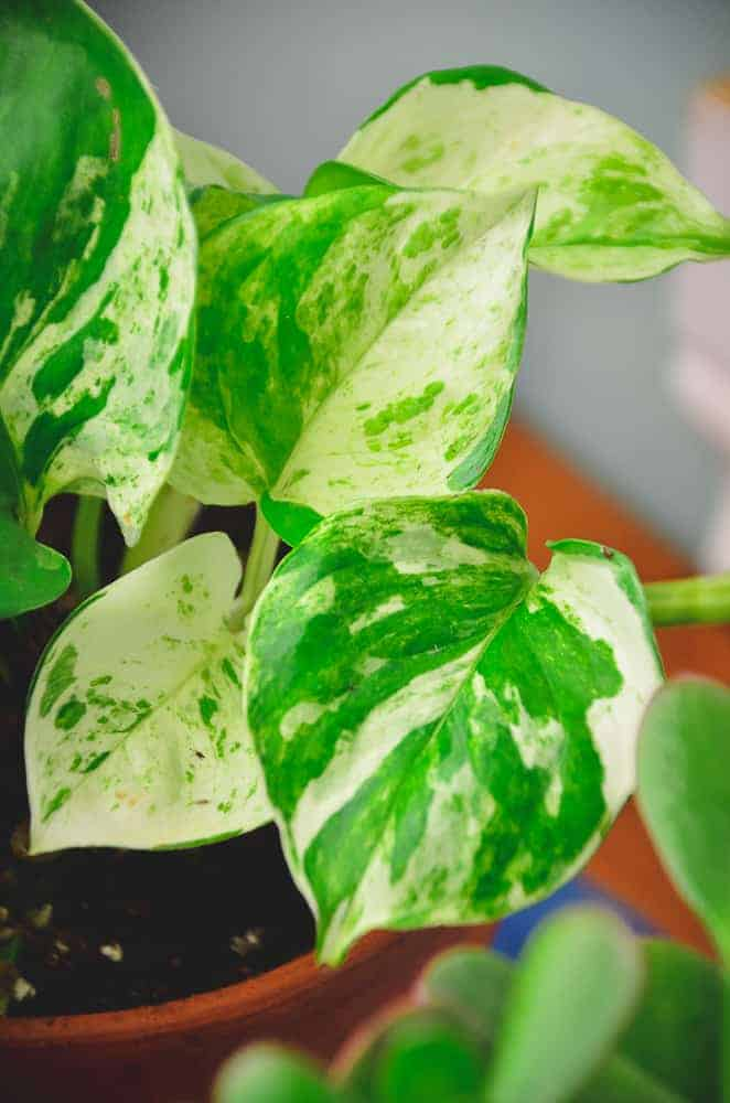 I Bought Houseplants Online in the Middle of Winter, Here's How it Went
