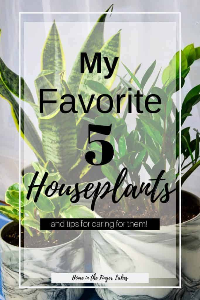 My 5 Favorite House Plants