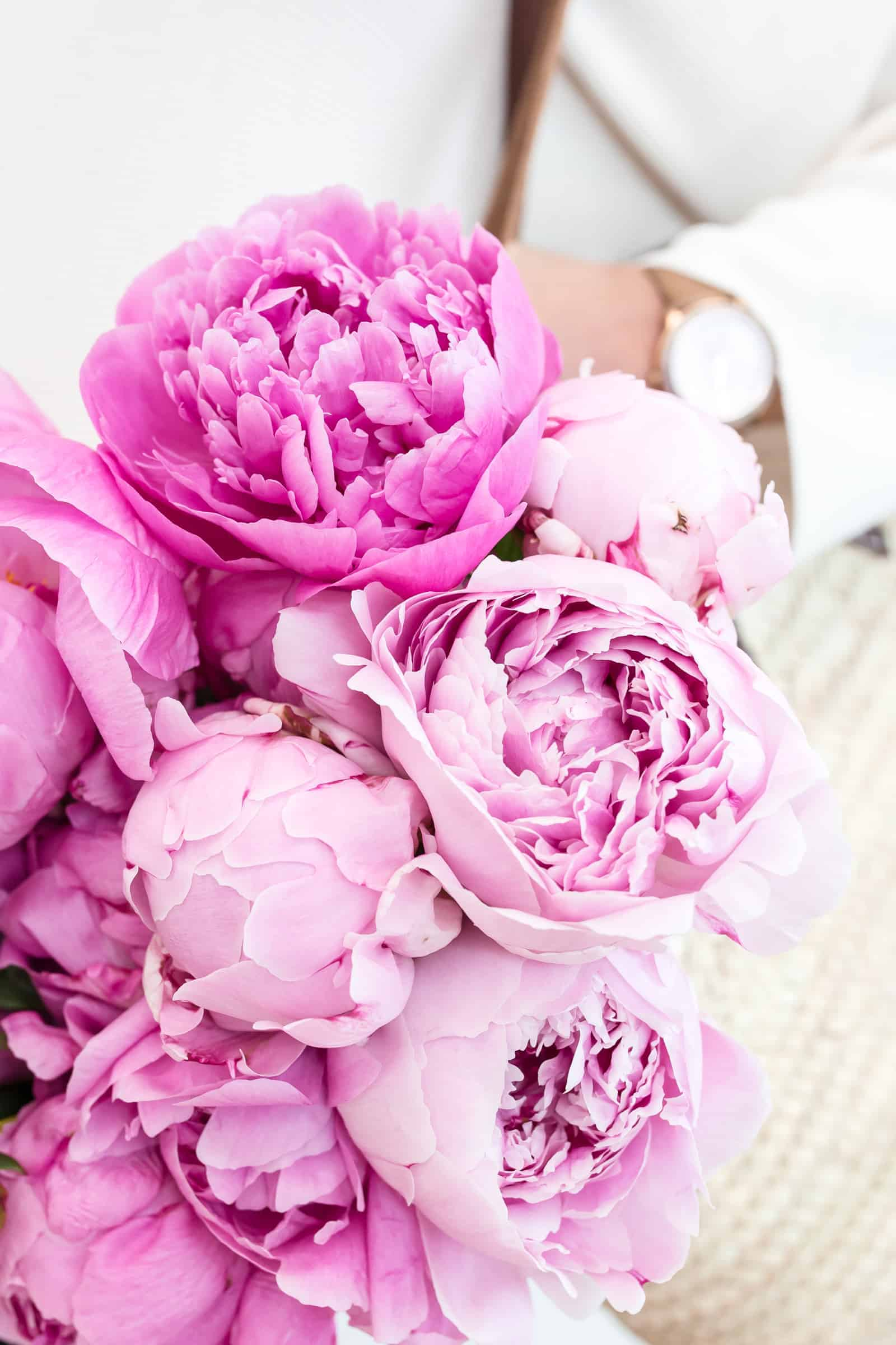 How to Grow Peonies for Fragrant Bouquets