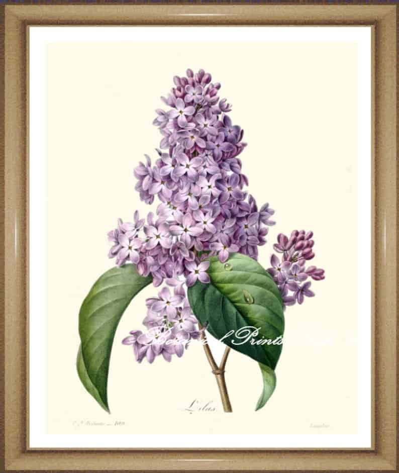 5 Unexpected Ways To Bring Lilac Season Into Your Home Home In The Finger Lakes