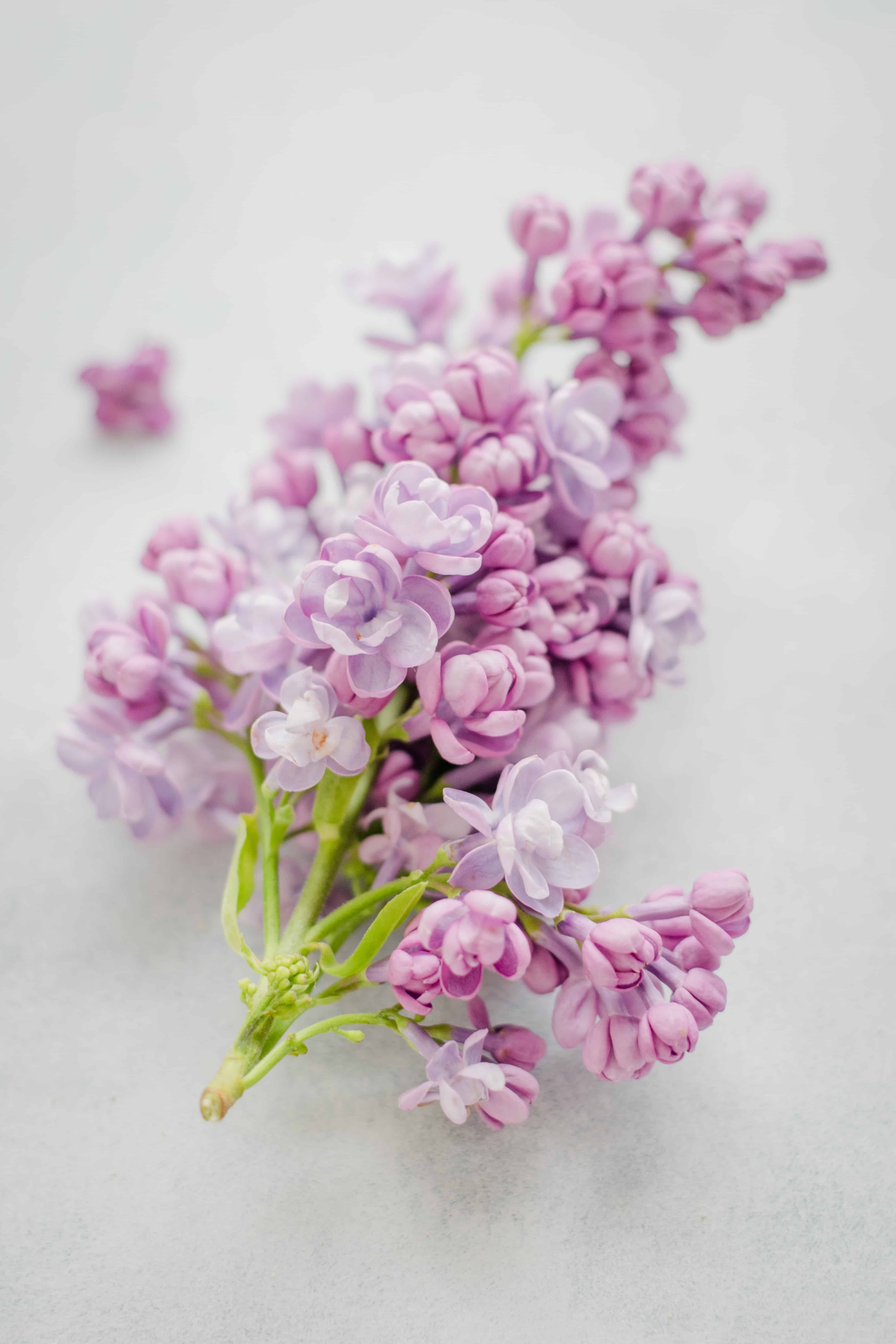 5 Unexpected Ways to Bring Lilac Season into Your Home