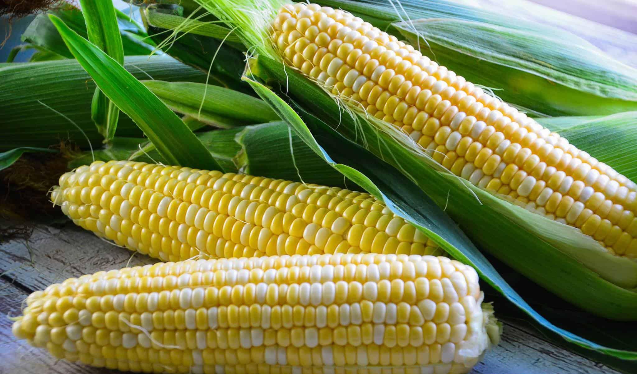 Freezing Sweet Corn