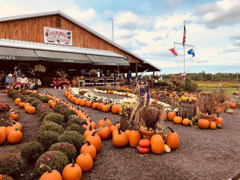 Large Pumpking and mum display in front of Burnaps Fruit Farn market.