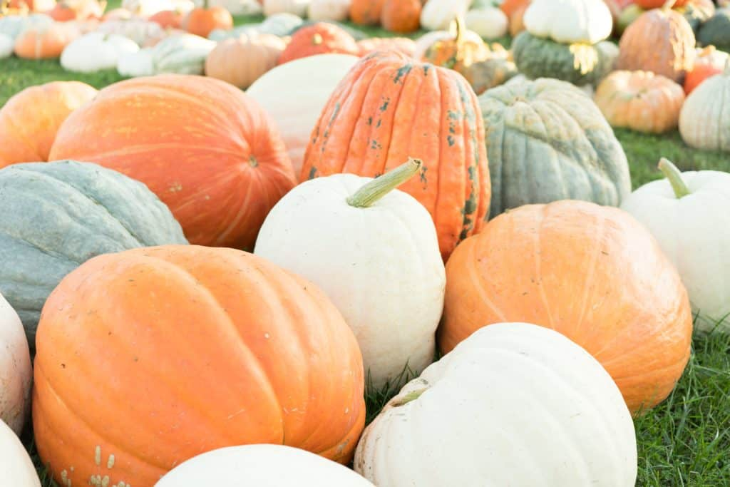 Display of large  organe, green and white pumpkins on grass, with gourds in the background.