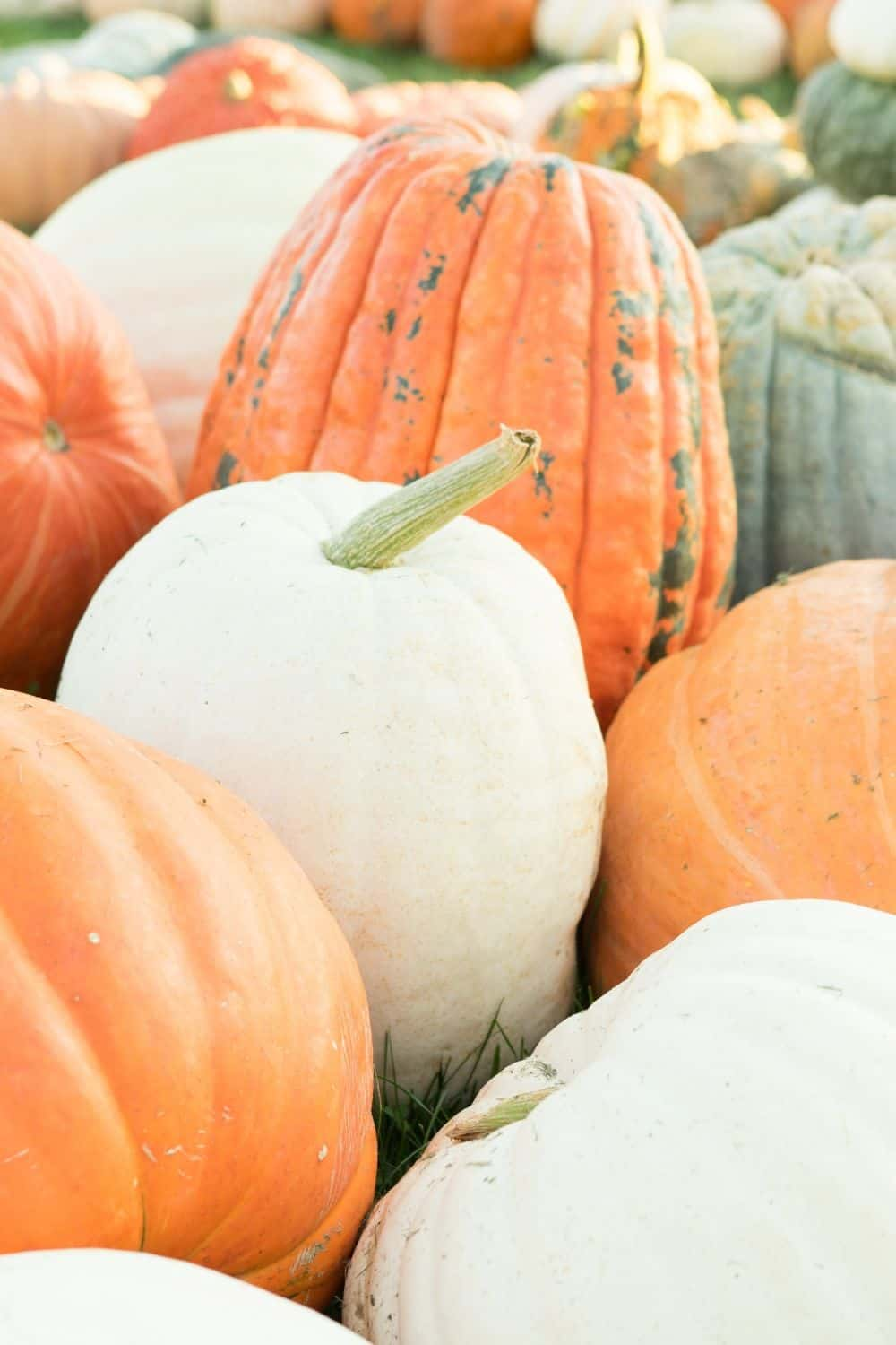Our Favorite Pumpkin Patches in Wayne County NY