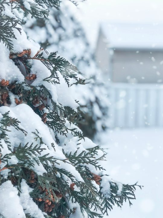 Things To Do Before Snowy Weather
