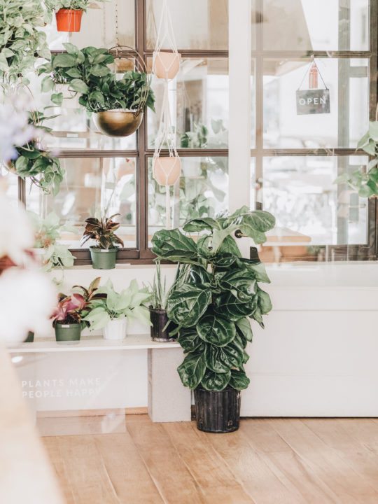 4 Tips for Growing Plants Indoors